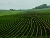 Farmland's Patterns #1