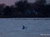 sliver-lake 2